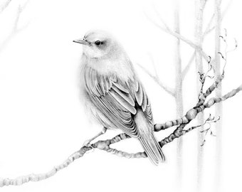 Bird Pencil Drawing Original Art Giclee Print of my Original Finch Drawing Fine Art Nature Illustration Wall Decor Home Woodland Art Gifts