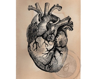 Anatomical Heart Print Hand Drawn Illustration Valentine's Day