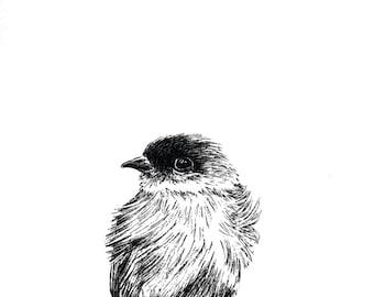 Cute Bird Print Hand Drawn Original Art Illustration