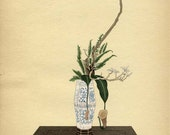 BOTANICAL BOOK PAGE 1934 Japanese Plate No. 20 Nepenthes Hookerina, Fern, Dead Branch