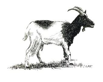 Goat Print Animal Printsgoat Drawing Art Domestic Animals Pen And Ink Farm Printsfarm Artpet