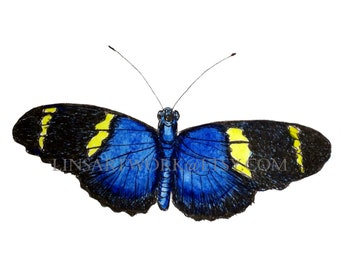 Blue and Black Butterfly, digital print, butterfly art, insect art, bug art, for butterfly lovers, gossamer wings
