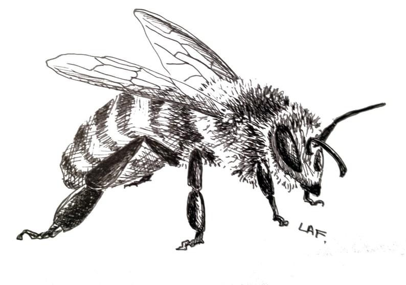 оса рисунок карандашом полосатое