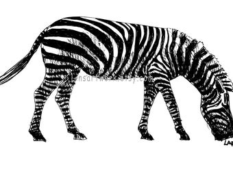 Zebra drawing,pen and ink art,wild animals. Original drawing or Limited Edition Print-Zebra grazing. black archival pen and ink.