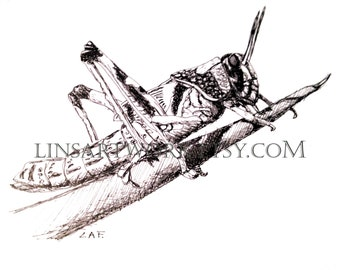 Downloadable Locust Print, Locust print, Grasshopper print Pen and Ink Drawing of a Locust, bug artwork, pen and ink art, insect prints
