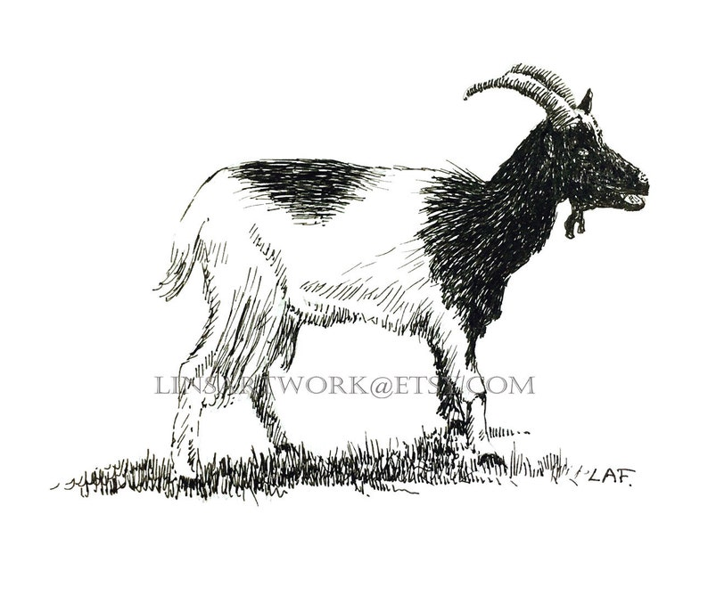 Goat, animal art work Original goat drawing,goat art,domestic animals,pen  and ink goat drawing, farm animal drawings farm animal art,pet art