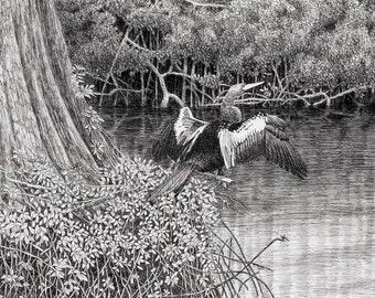Anhinga drawing,Everglade art,pen and ink drawing,tropical bird art,Everglade prints,florida bird prints,everglades art,bird art,Anhinga art
