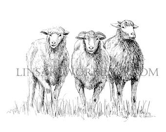 Downloadable 3 Sheep Print , Sheep print, Pen and Ink digital prints, black and white sheep print .sheep image, sheep prints digital