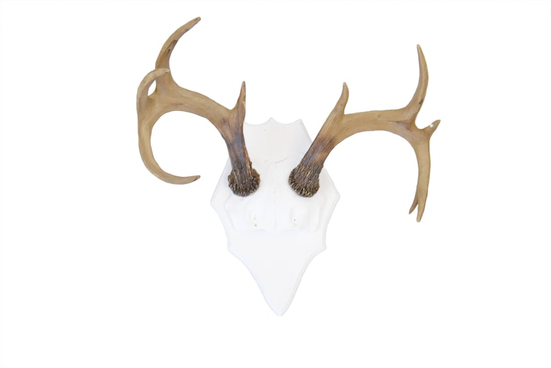 Large Faux Deer Antler Mount  White Plaque With Natural image 0