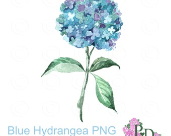 Watercolor Clipart Blue Hudrangea Clip Art Digital Flower PNG No Background EasyPrintPD