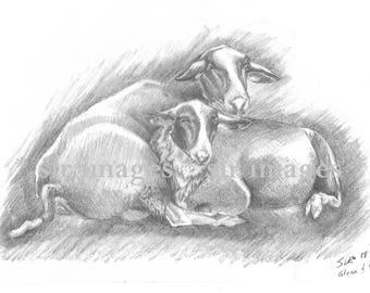 glenn & oreo ram sheep and lamb pencil drawn print