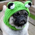 Dog Hat  - Big Eye Frog Hat/ Made to Order