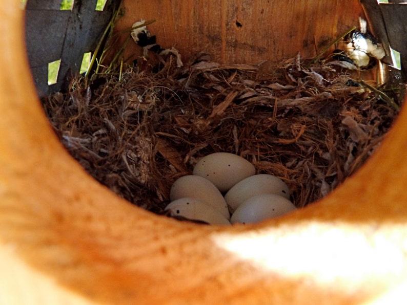 Wooden Bird Houses Outdoor Birdhouse Bird Hosues Etsy