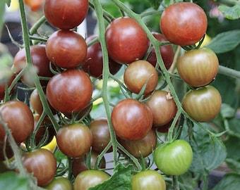 Tomato azteca blackie 25 seeds