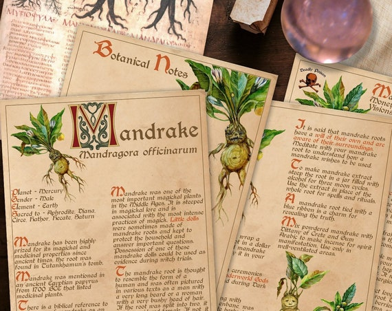 BANEFUL MANDRAKE Witch's Herb  For your Book of Shadows - Instant Download
