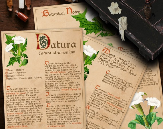 BANEFUL DATURA Witch's Herb  For your Book of Shadows - Instant Download