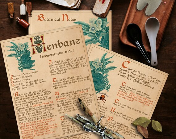 HENBANE WITCH'S  BANEFUL Herb  For your Book of Shadows - Instant Download