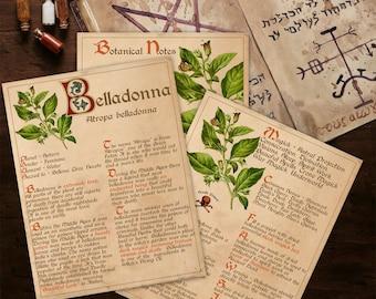 Herb correspondence   Etsy