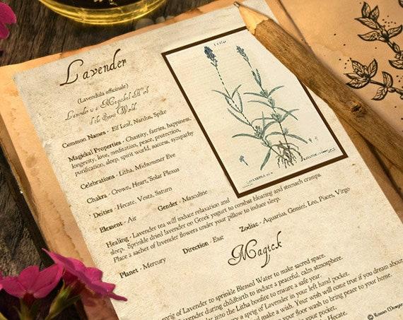 Lavender Magick Herb
