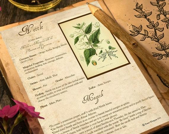 Nettle Magick Herb