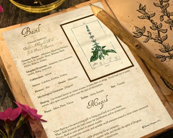 Basil Magick Herb