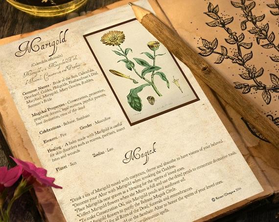 Marigold Magick Herb