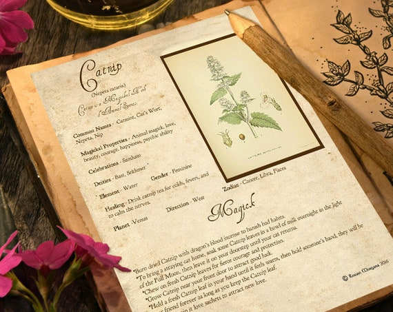 Catnip Magick Herb