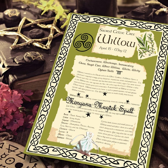 Willow Sacred Celtic Tree