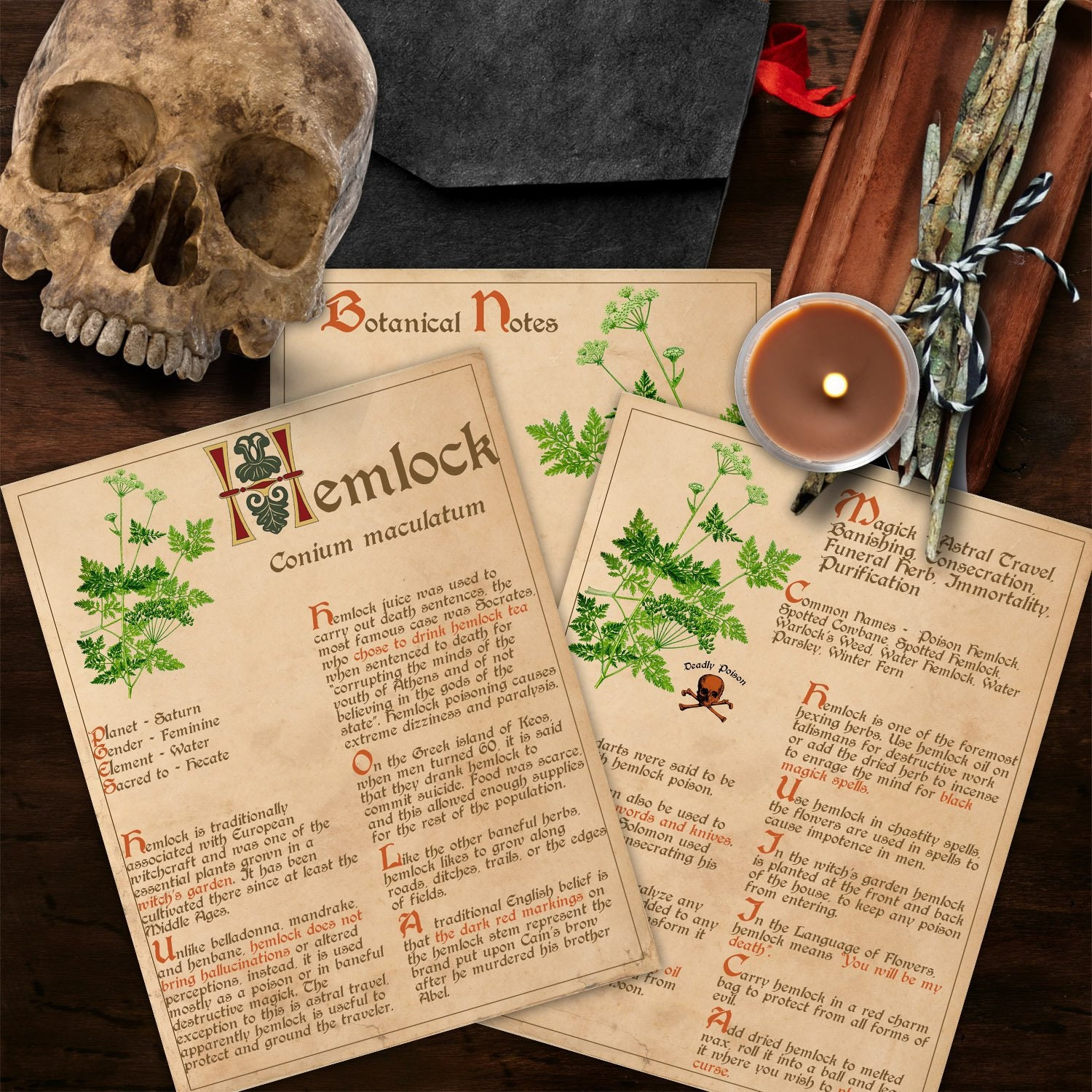 BANEFUL HEMLOCK Witch's Herb for Book of Shadows - Instant Download