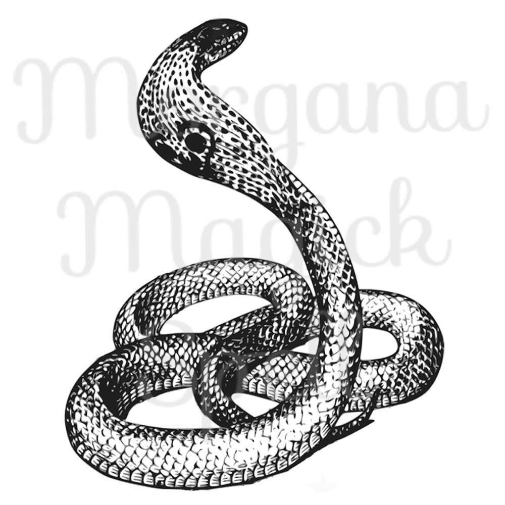 COBRA SNAKE Viper Royalty Free Clip Art Illustration ...