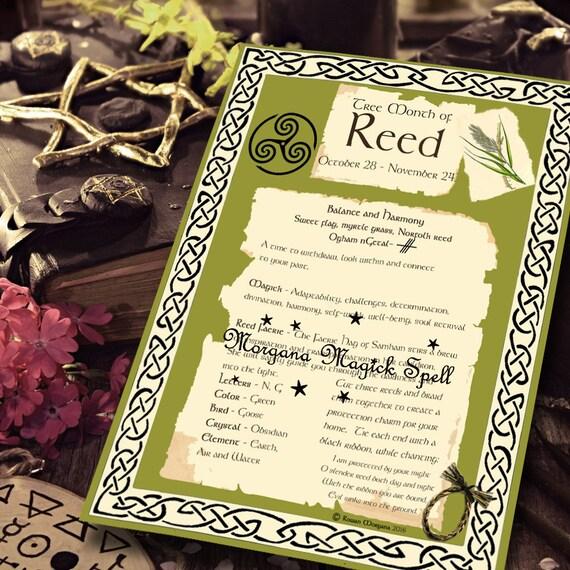 Reed Sacred Celtic Tree