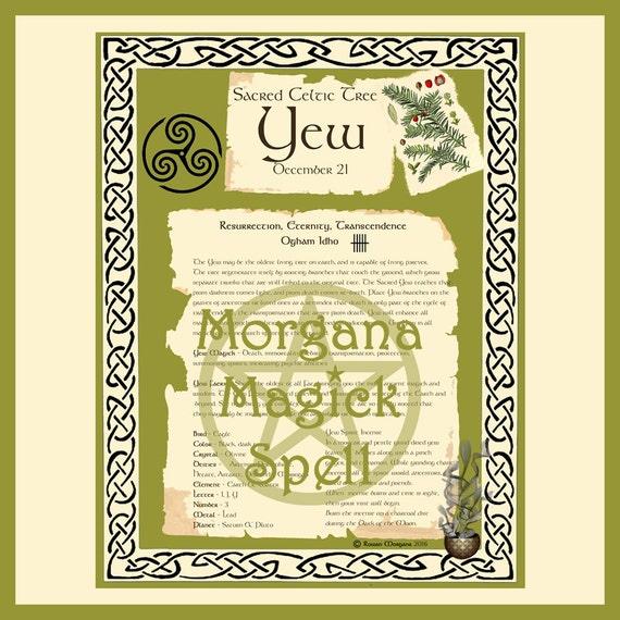 Yew Sacred Celtic Tree