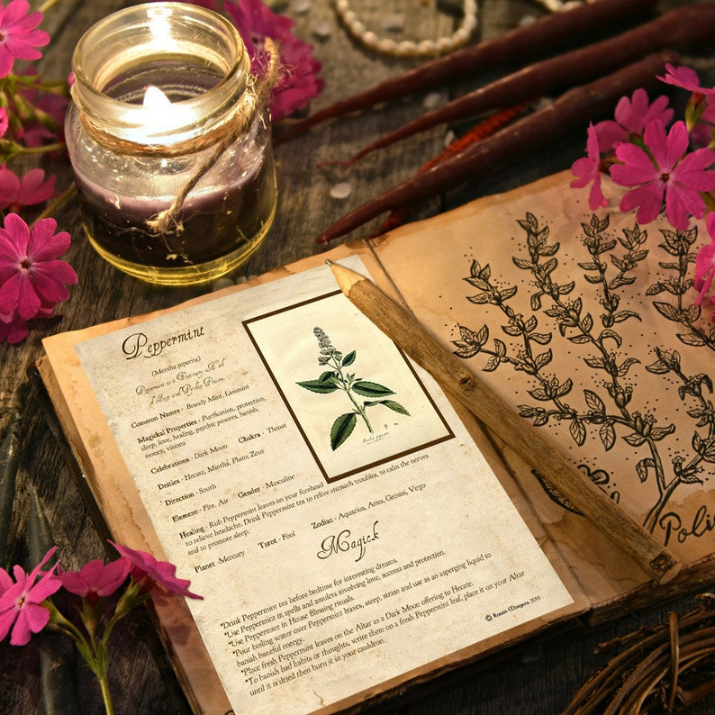 PEPPERMINT MAGICK HERB For Witchcraft Book of Shadows - Instant Download