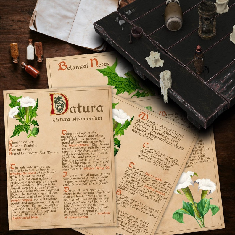BANEFUL DATURA Witch's Herb for Book of Shadows - Instant Download