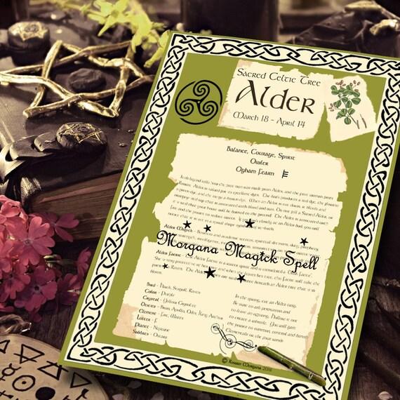 Alder Sacred Celtic Tree