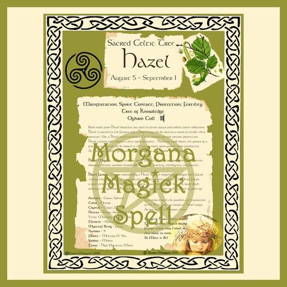 Hazel Sacred Celtic Tree
