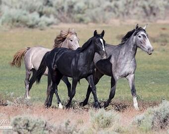 Adobe Town Mares - Fine Art Wild Horse Photograph - Wild Horse - Adobe Town - Fine Art Print - Iconic Wild Horse