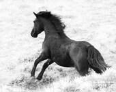 Wild Horse Photography Wild Black Stallion Runs Wild Horse Wall Art Equine Art Print Great Divide Basin Wild Stallion