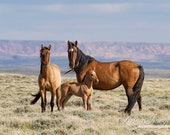 Wild Horse Family Stands - Fine Art Wild Horse Photograph - Wild Horse - Great Divide Basin