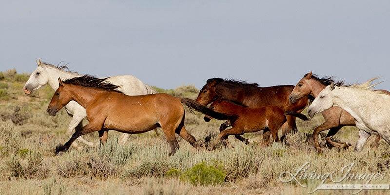 Wild Horses Run Fine Art Wild Horse Photograph Wild Horse ...