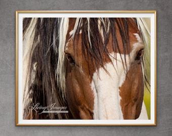 "Wild Horse Photography Wild Stallion Picasso Print - ""Picasso's Eyes"""