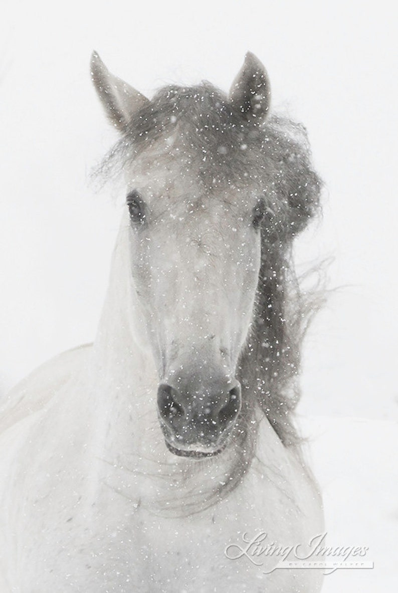 Horse Photography Snowy Mare Horse Snow Wall Art Andalusian Etsy