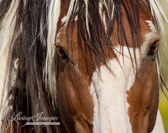 Picasso's Eyes - Fine Art Wild Horse Photography - Wild Horse- Picasso - Fine Art Print