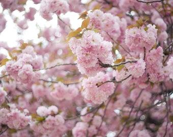 Pink Cherry Blossom Photograph, Digital Download, Nature Photo, Flower Photo, Modern Decor, Printable Wall Art