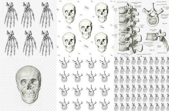 Menschliches Skelett Digital Papiere Skull & Bones Digital | Etsy