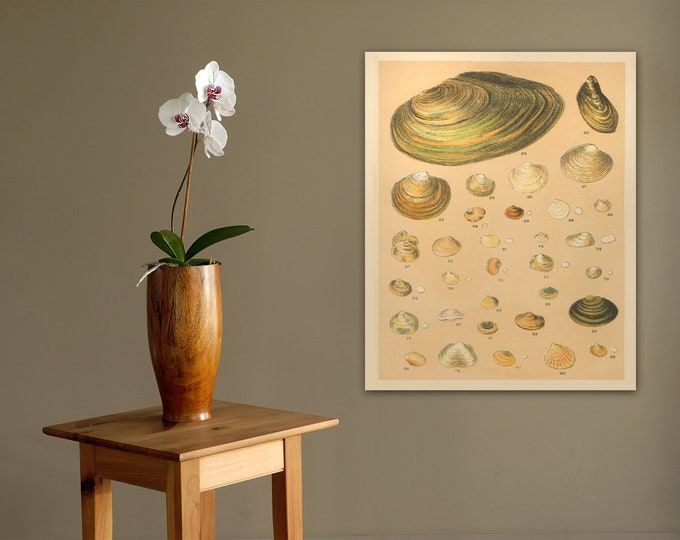 Print of Sea Shell Artwork for Nautical or Beach-Themed Decor. Printed on Stretched Canvas, Photo Paper, or Matte Paper. Free Shipping!!