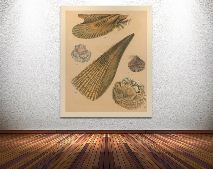 Print of Sea Shell V Artwork for Nautical or Beach-Themed Decor. Printed on Stretched Canvas, Photo Paper, or Matte Paper. Free Shipping!!