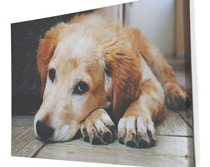 Your Custom Pet's Photo Printed on Canvas, Photo Paper, or Matter Paper!