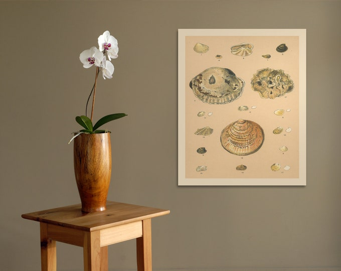 Print of Sea Shell III Artwork for Nautical or Beach-Themed Decor. Printed on Stretched Canvas, Photo Paper, or Matte Paper. Free Shipping!!