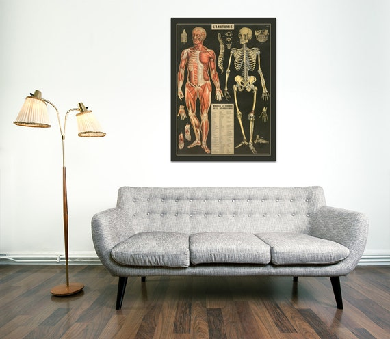 High Quality Print of French Diagram of Skeletal/Muscular Anatomy, on Premium Photo Paper, Heavy Matte Paper or Stretched & Coated Canvas